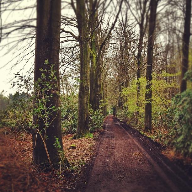 Entering the muddy forest… Merkemveldweg, Zedelgem